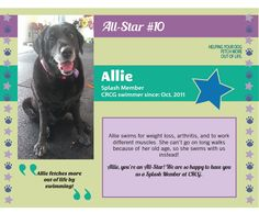Meet CRCG All Star, Allie! Allie swims for weight loss, arthritis and to work different muscles. She can't go on long walks because of her old age, so she swims with us instead!
