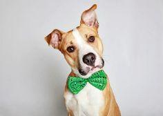 Cães de abrigo ganham book profissional em campanha de adoção | Virgula