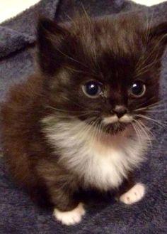 Mustache kitty.