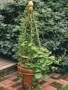 Trellis in a Pot              Transform a potted vine from a spill-over creeper into a reach-the-sky climber when you give your plant a vertical structure to latch on to. This simple trellis is crafted from strips of cedar, some quilter's rings, and a purchased finial. After assembling the materials, you can complete it in a day or less.