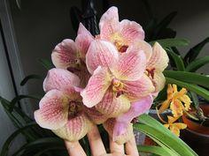 Lo PEOR que puedes hacerle a tu Orquídea || Orquiplanet - YouTube