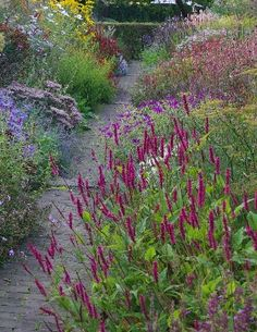 Discover recipes, home ideas, style inspiration and other ideas to try. Meadow Garden, Plants, Cottage Garden, Country Gardening, Garden Paths, Cottage Garden Plants, Garden Borders, Beautiful Gardens, Prairie Garden