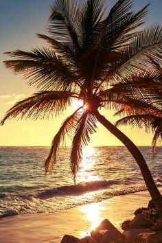 Tree Wallpaper Iphone, Beach Wallpaper, Summer Wallpaper, Nature Wallpaper, Wallpaper Backgrounds, Iphone Backgrounds, Iphone Wallpapers, Beautiful Sunset, Beautiful Beaches