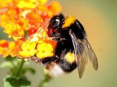 Abelha de verdade pousando na flor #abelhas