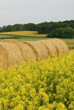 hay bales and yellow flowers Country Farm, Country Life, Country Living, Country Roads, Country Bumpkin, Champs, Marie Von Ebner Eschenbach, Beauvais, Fields Of Gold
