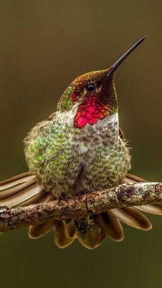 . Hummingbird