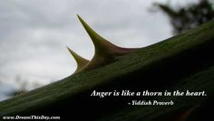 You create stress in your life by getting angry, and you can instantly remove that stress by granting forgiveness. - Jonathan Lockwood Huie