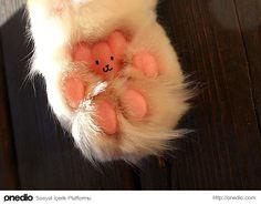 Kedi patileri küçücük bir oyuncak ayıyı andırıyor değil mi?
