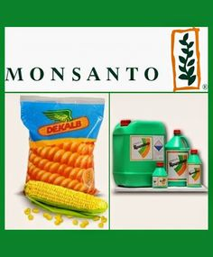 Monsanto India Ltd stock was higher by 8% at Rs. 2220. The company may pull its biotech soybean seeds out of Argentina, according to reports. - See more at: http://ways2capital-equitytips.blogspot.in/2016/05/monsanto-zooms-8.html#sthash.nPX5zK9K.dpuf