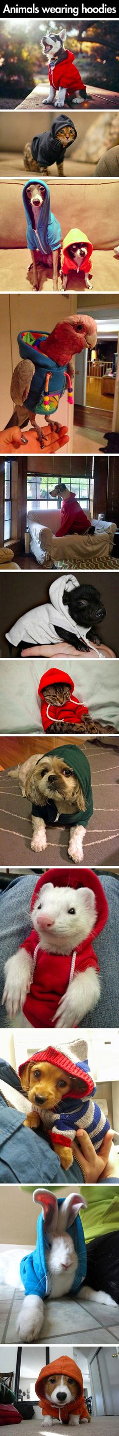 Hoodies make everything better.