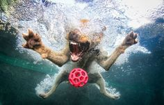 Underwater dog.    Seth Casteel Photography