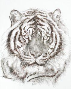 Big Cat Drawing - Shimmer by Barbara Keith