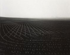 Rhondal McKinney Illinois Landscape