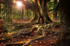 Tree roots fantasy Ideas for 2019 Mystical Forest, Fantasy Forest, Fantasy Castle, Fantasy World, Forest Wallpaper, Home Wallpaper, Tree Plan, Pine Tree Tattoo, Wordpress