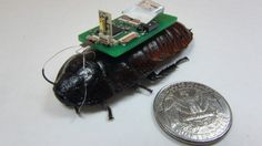 Biorobotic Roaches Can Use Microphones To Search Rubble For Survivors
