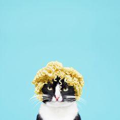 "princesscheeto: "" Got my hair did.  #CheetoAsMarilyn "" Noodle Head :)"