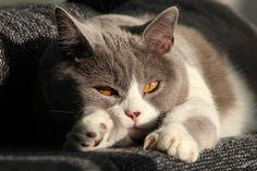 Katze alleine lassen - Sorgen Sie für Ihre Abwesenheit vor! - http://www.transportbox-katzen.de/vorsorge-katze-abwesenheit/