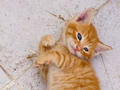 gato manhoso