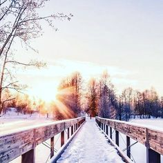 Winter Wonderland