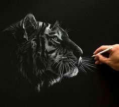 Awesome Drawing by Richard Symonds  Instagram.com/richardsymondsartist Tiger Drawing