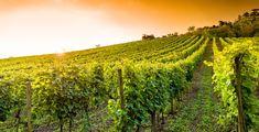Dopo i nostri formaggi,limoni ecc ora anche i nostri vini!L'Europa infame che uccide l'agricoltura http://jedasupport.altervista.org/blog/attualita/europa-infame-che-uccide-agricoltura/