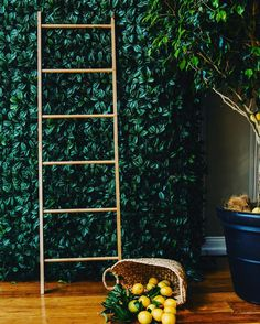 It's not easy being green our Foliage Wall backdrop would like to dispute that old saying  #foliagelove #foliagewall #easy #brisbaneevents #eventstyling