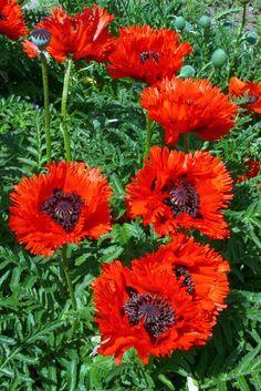 My Secret Garden, Garden Inspiration, Plants, Gardening, Lawn And Garden, Plant, Planets, Horticulture