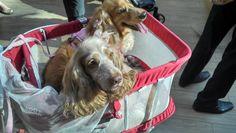 #mydogs #rio #brasil