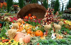 Farmville harvest @ Flower Dome - Gardens By The Bay