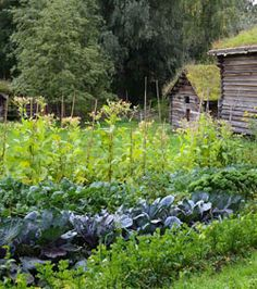 Permaculture: Self-sustaining food, fibre and energy producing ecosystems - The Forest Garden