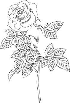 """Чайно-гибридная роза """"Бренди"""" Раскраска"""