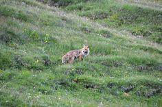 Grossglockner panorámaút, Ausztria Salzburg, Kangaroo, Animals, Baby Bjorn, Animales, Animaux, Animal, Animais