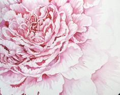 Peinture aquarelle originale de rose pivoine