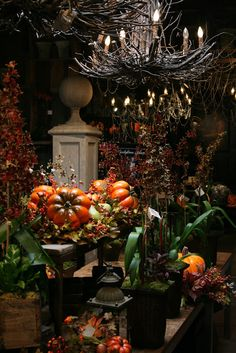 Halloween display at Roger's Gardens (dark and lush, love the twig chandelier)