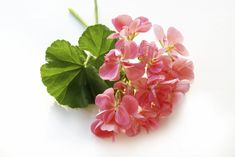 Geranium essential oil uses