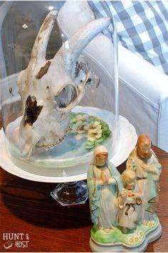 glass cloche vintage plates skull