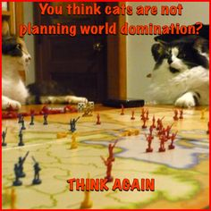 Cats want to rule the world! Here is proof.  #cats #funnycats