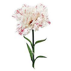 SM Flor de clavel seda blanca
