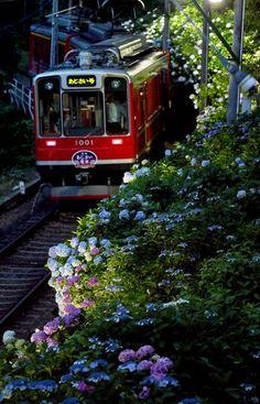 箱根登山電車『夜のあじさい号』(神奈川・小田原) A train named Yoru no Ajisai-go of Hakone Tozan Railway, Odawara, Kanagawa