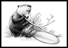 Beaver Tail by Qiu-Ling
