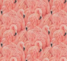 Retro Chic This Hip and Retro Chic Large Flamingo Wallpaper Can Add A Bit Of Cool To Many Rooms. Get Creative And Stand Out. A raised textured blown vinyl wall-covering featuring extravagant pink flamingos. Shown in shades of pink, peach and black. Width 0.52 m Length 10.05 m Repeat 0.53 m Wallpaper type Blown vinyl Composition Paste the paper ColourwayPink Ships to USA & Canada only