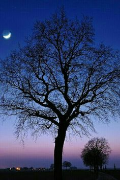 *🇧🇪 Moonrise (Liège, Belgium) by Pierre Hanquin Twilight Moon, Tree Images, Unique Trees, Images Google, Mother Earth, Mother Nature, Amazing Nature, Night Skies, Cool Photos