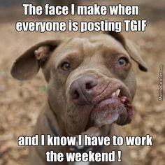 TGIF funny pic!