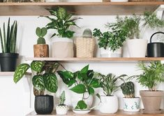 Don't have a green thumb? These low-maintenance plants will stay green with even the tiniest bit of TLC. The post 13 Houseplants Anyone Can Grow appeared first on Reader& Digest.