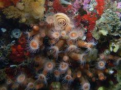 nudibranch eggs - Google Search