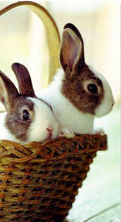 rabbits by bodulka