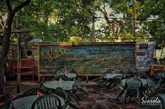 Shady Grove Restaurant Austin Texas by ScarolaPhotography on Etsy, $24.00