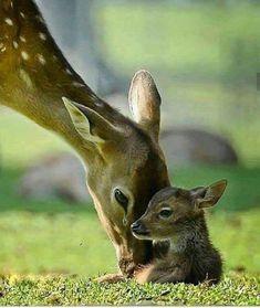 Baby Animals Wild Mothers New Ideas Cute Creatures, Beautiful Creatures, Animals Beautiful, Nature Animals, Animals And Pets, Cute Baby Animals, Funny Animals, Photo Animaliere, Tier Fotos