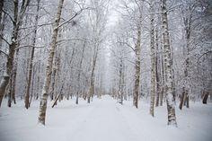 #паркДубки #Сестрорецк #СанктПетербург #зима