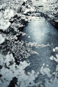 sakura - cherry blossom over water Beautiful World, Beautiful Places, Nature Sauvage, Blossom Trees, Cherry Blossoms, Reference Images, Body Reference, Winter Scenes, Science Nature
